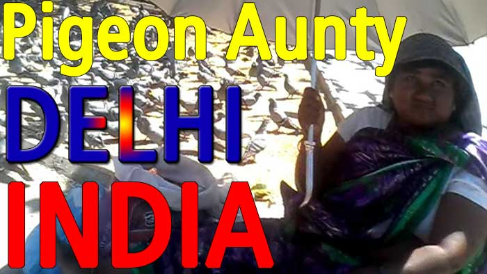 Pigeon Aunty at Connaught Place New Delhi, India