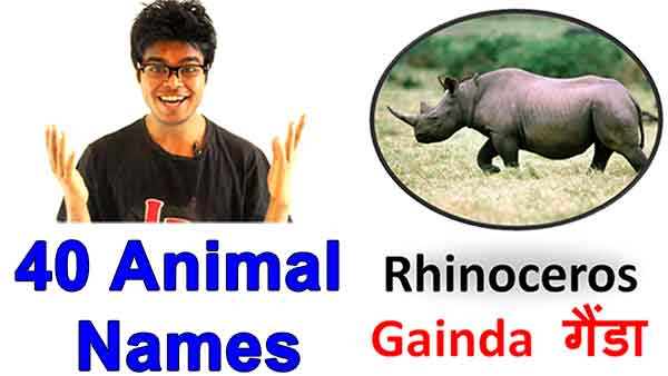 animals names in Hindi and english with pictures