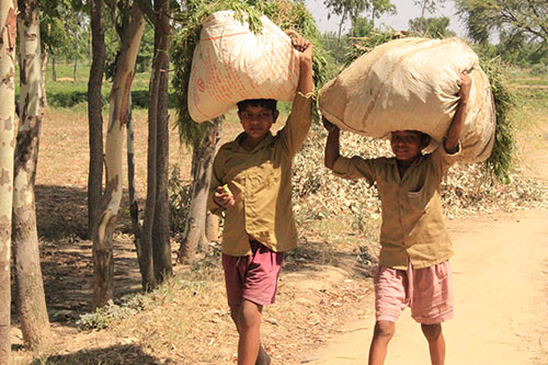 Indian village boys in Uttar pradesh