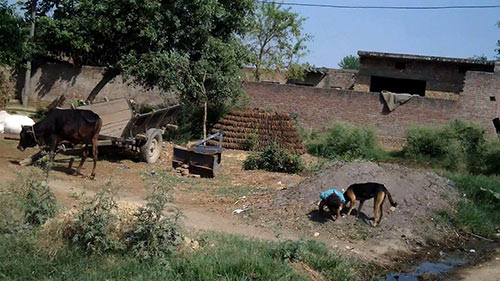 miserable life photos in uttar pradesh India, girl shitting and dog eating
