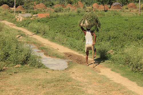 Indian Farmer carrying grasses on head